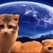 夜も猫カフェ❢貸し切…