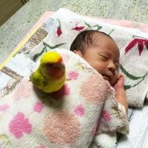 ぴーちゃんと赤ちゃん…