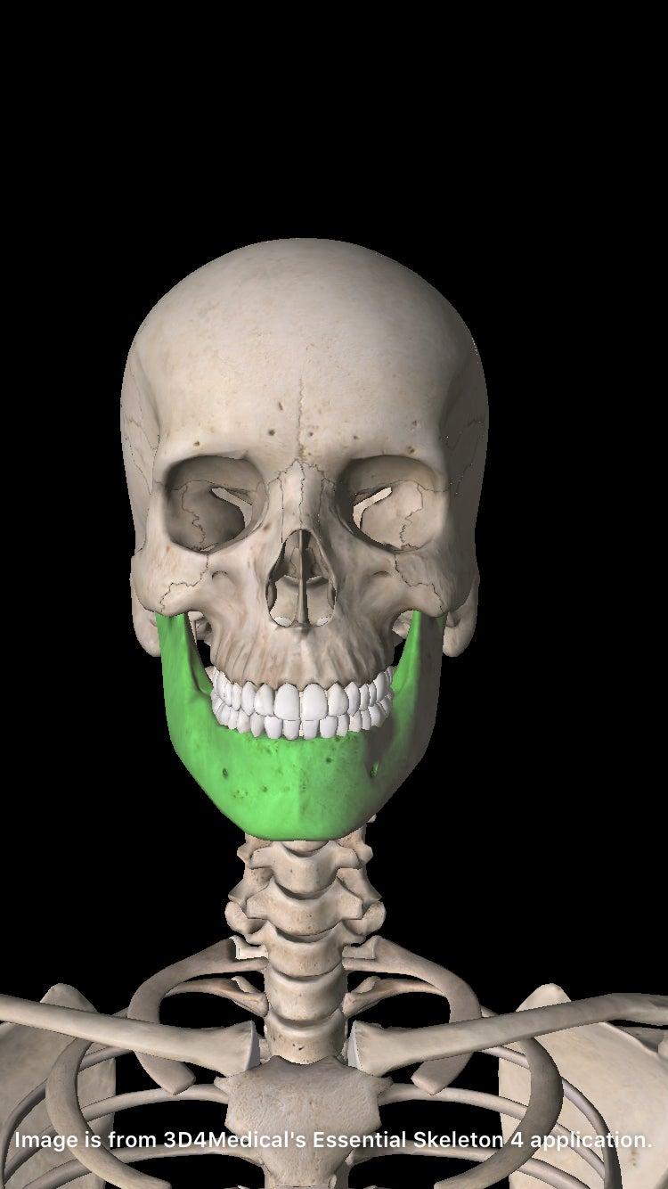 顎(正面)