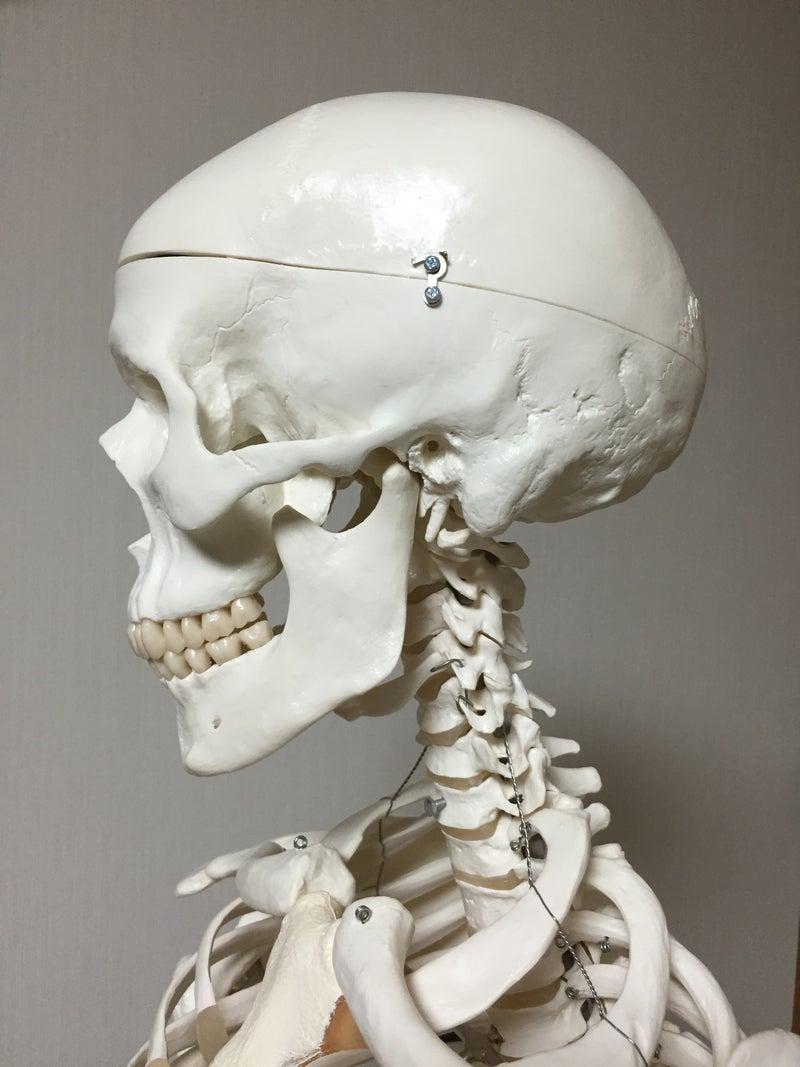 顎の開き1