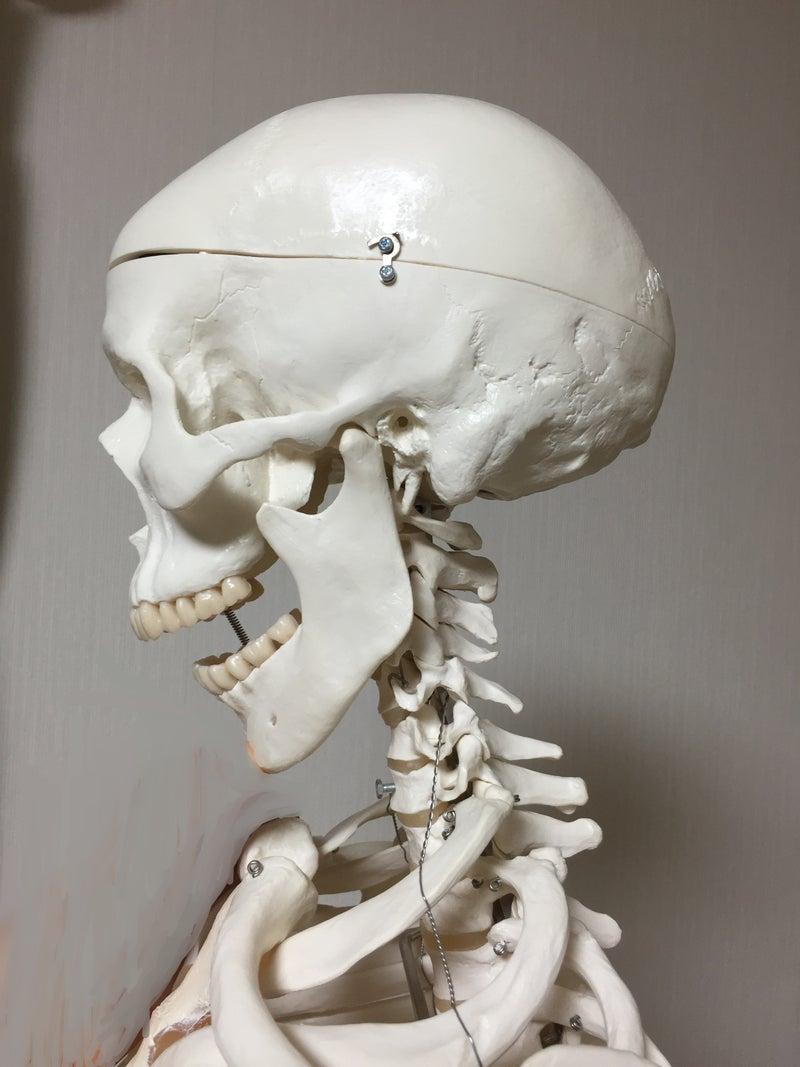 顎の開き2