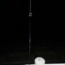 #鰻の夜釣り
