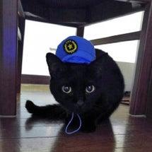 猫のお巡りさん?