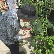 野菜収穫♪ @平戸