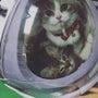 猫カフェ作業中