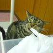 猫タイフ~ン