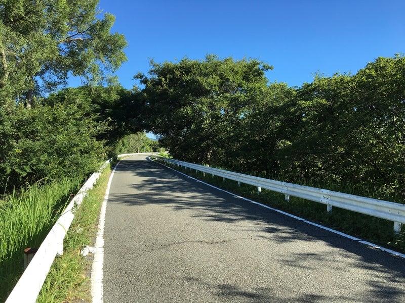 12堤防道路木のトンネル
