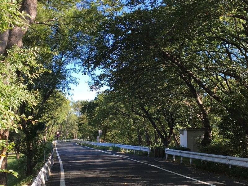 13木のトンネル2