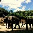 初めての上野動物園。