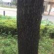 「昇進成就の木」(セ…