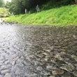 松田の川遊び
