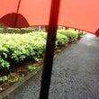 台風に強い傘、BLA…