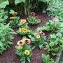 週末の庭仕事