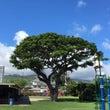 ハワイのスクールの打…