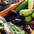 オーガニック野菜の販…