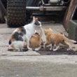 恐るべき子猫の死亡率