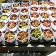 食虫植物展めぐり〜箱…