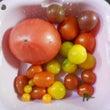 トマトの出来映え・・…