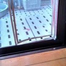 猫用網戸戸