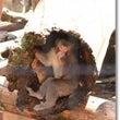 再訪 ~ 旭山動物園…