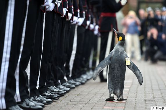 ペンギン准将