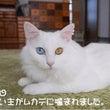 No.1370 子ム…