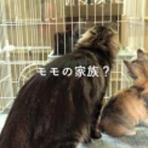 猫たちのご対面。モモ…