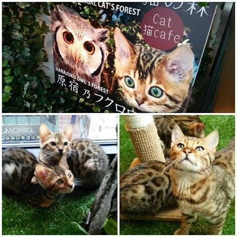 京都ひょう猫の森へ行ってきた!新京極通りにベン …