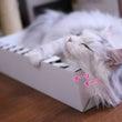 箱を堪能する猫