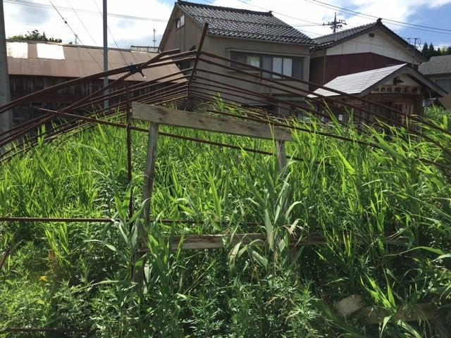 草だらけみかん畑