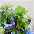 紫陽花とクレマチスの…