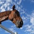 馬の安全第一の学校!…