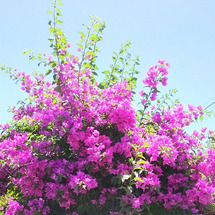 南国の花は元気だ