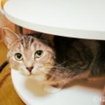 猫パンチがキレキレ過…