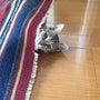 実家の愛猫ちゃん。