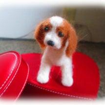 サラの犬毛でサラ人形…