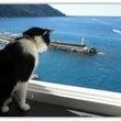 元祖「海を眺める猫」…