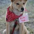 7月卒業犬のご紹介