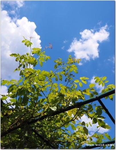 武蔵野市 バラの庭 管理作業