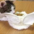 猫ちゃん天使 (ハロ…