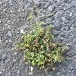 都市の植物 8月も終…