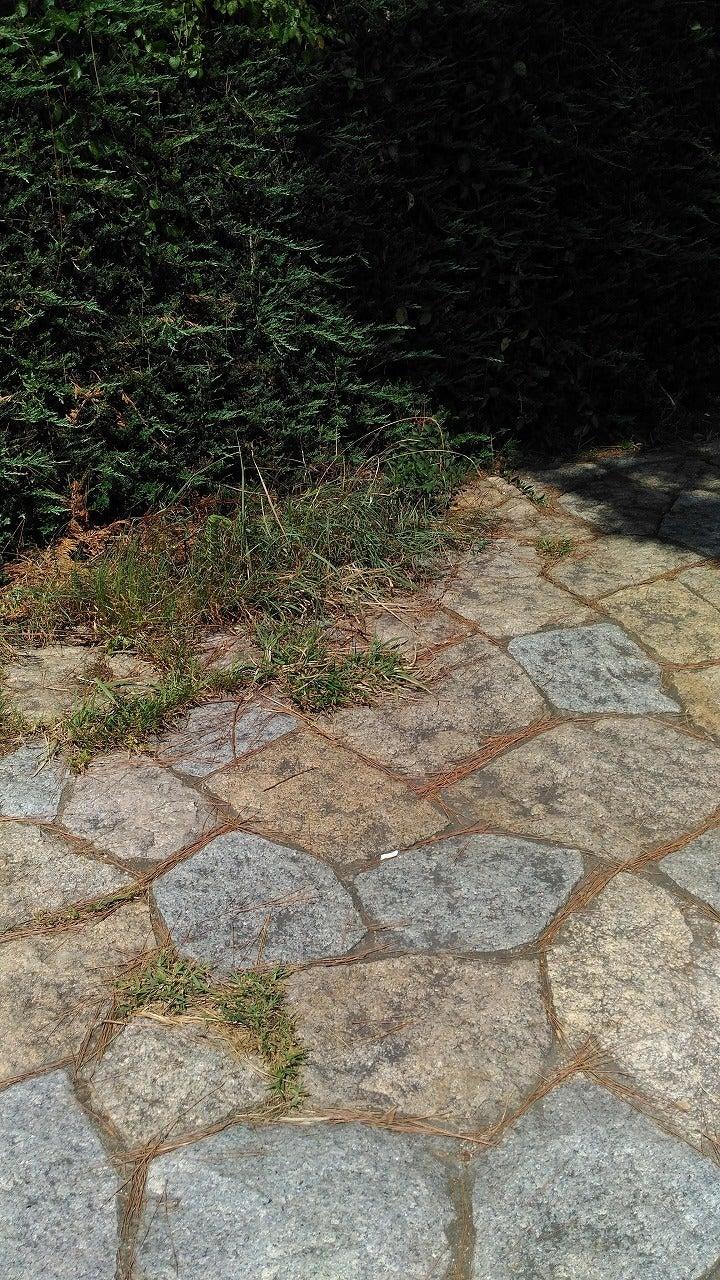 矢倉緑地路面