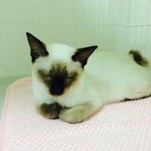 子猫ちゃん 居眠り