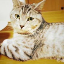 可愛い猫拳法の巻き添…
