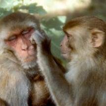 サルで観察されてセン…
