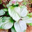 今朝の植物蒸留術と瞑…