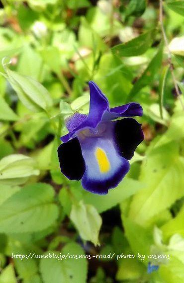 お花 No.1