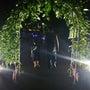 夜の植物園❤