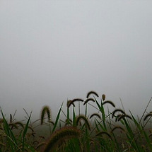 雲の中の原村〜天気は…