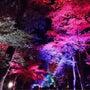 下鴨神社ライトアップ